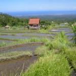 Hütte inmitten der Reisfelder (ursprünglich)