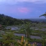 Sonnenuntergang über den Reisterassen