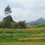 Das Haus inmitten der Reisfelder